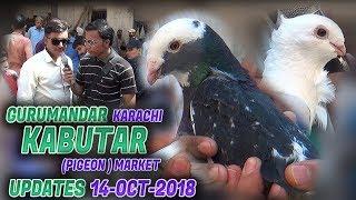 Guru Mandir Kabootar (Pigeon)  Market 14-10-2018 Updates (Jamshed Asmi Informative Channel)