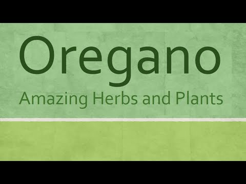 Oregano Health benefits - Amazing Herbs and Plants - Oregano nutrition facts