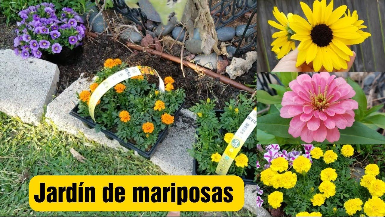 Plantando y progreso en mi jardín de mariposas: zinnias, marigolds y girasol