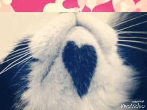 Котики ко Дню святого Валентина!!!