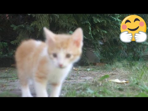 Cat scared by the kitten 4k UHD 🐈🐾😻 Drizzle to Downpour (Silent Partner)