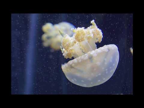 National Aquarium in Baltimore, Maryland Upclose Detailed