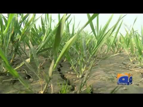 Special Report - Govt launches crop insurance scheme in Punjab