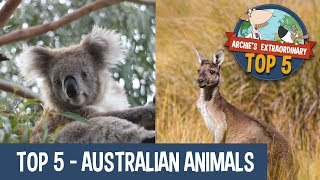 Australian Animals | Archie's Extraordinary Top 5
