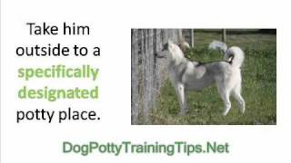 Older Dog Potty Training - How to Potty Train an Older Dog