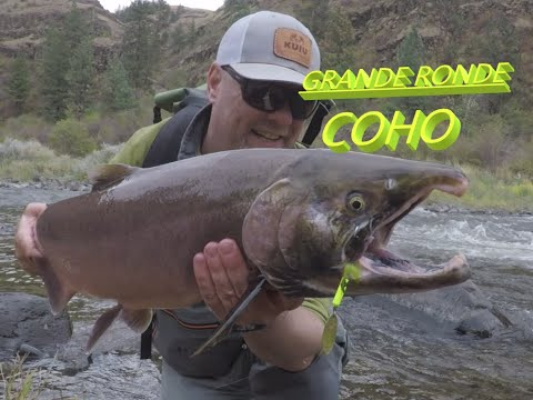 Grande Ronde River COHO, Fishing For Steelhead, And Fall Coho Salmon On Oregons Grande Ronde River.