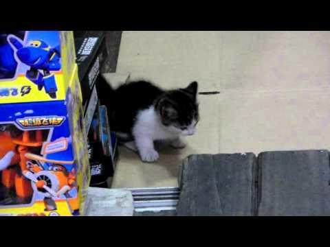 Cute Kitten at Wen Miao, Shanghai Anime Store Street