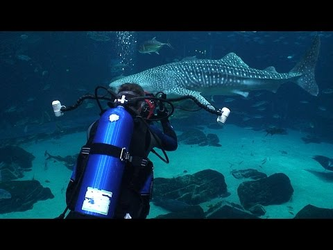 Georgia Aquarium (HD) | JONATHAN BIRD'S BLUE WORLD