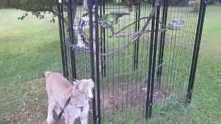 Max Canada Lynx & Barnyard Parrot