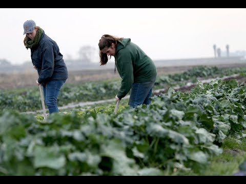 First Generation Farmer's Urban Edge program launches in Discovery Bay