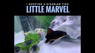 I #adopted a disabled fish - 'Little #Marvel'