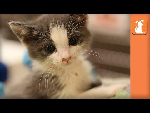 Cutest Kitten Meow EVER - Kitten Love