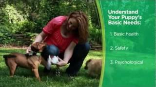 Iams® Puppy Care Video