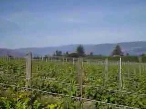 Tantalus Winery - Okanagan Valley, British Columbia, Canada - James Meléndez / James the Wine Guy