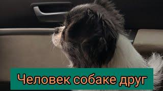Человек собаке друг Уж очень позитивное видео shorts