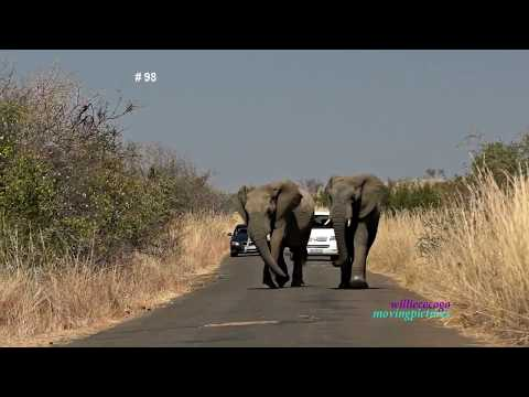 African Wildlife Photo Safari- 3          _(vid-# 98_720p)