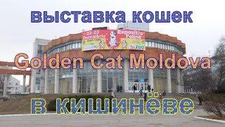 Выставка кошек - Golden Cat Moldova. Часть 1.