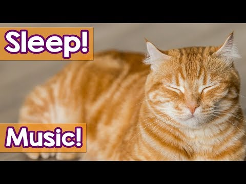 CAT MUSIC: 30 Minutes Cat MusicTo Help Your Cat Sleep! Soothe Your KittyWith Tranquil Music!