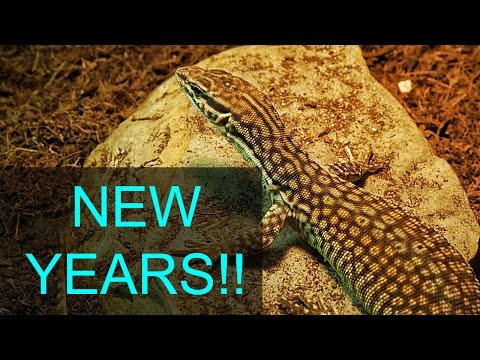 Reptile Room Tour January 2017!!