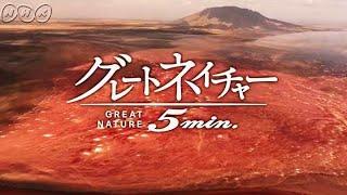 """""""赤と白""""の謎マサイが恐れる「死の湖」~タンザニア~『グレートネイチャー』"""