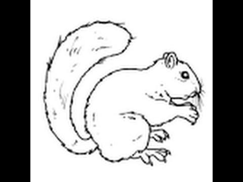 Come disegnare uno scoiattolo youtube - Modelli di colorazione per bambini ...