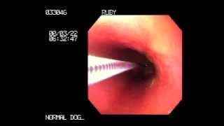 Small Animal Flexible Video Endoscopy Thumbnail