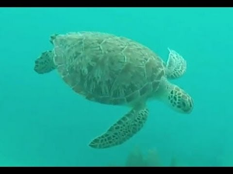 key largo molasses reef South Beach Divers