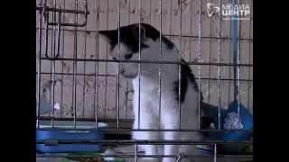 ВЧереповце вприюте для животных нечем кормить собак икошек