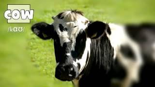 Domestic Animals – Домашние животные на английском языке