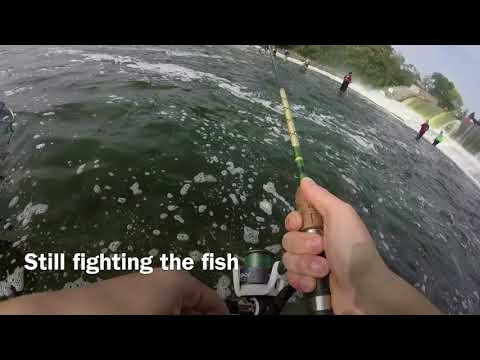 Oswego River Salmon Fishing 2017