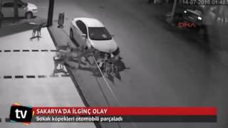 Нападение собак на машину