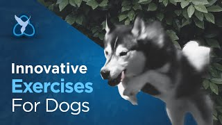 Innovative exercises for Dogs - how to use everyday things to create a canine gym