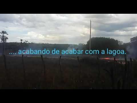 Crime ambiental/Chico Pereira|Ipueiras/CE