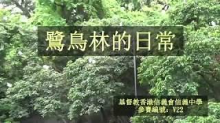 Publication Date: 2018-11-08 | Video Title: 亞軍- V22-- 鷺鳥的日常-- 基督教香港信義會信義中學