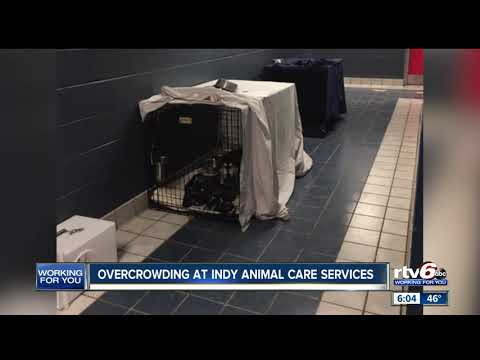 Overcrowding At Indianapolis Animal Care Services
