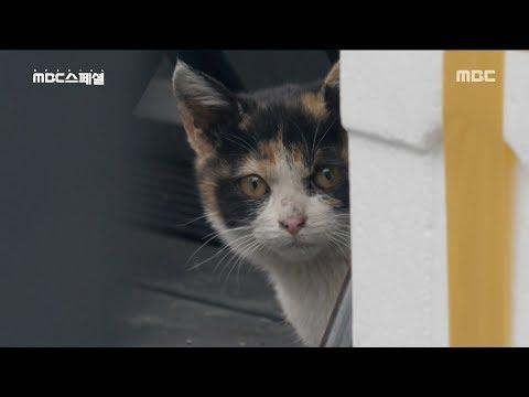 [NATURE] pigeons and cats fight,MBC 다큐스페셜 20190506