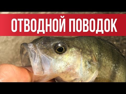 ОТВОДНОЙ ПОВОДОК! Самый ЛУЧШИЙ и ПРОСТОЙ монтаж 2019   Рыбалка с Fishingsib