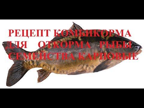 Рецепт комбикорма для откорма рыб семейства Карповые