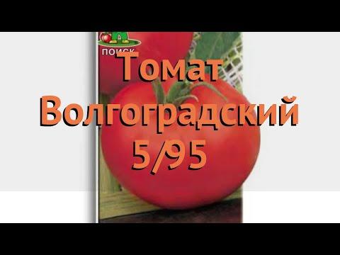 Томат обыкновенный Волгоградский 5/95 🌿 обзор: как сажать, семена томата Волгоградский 5/95