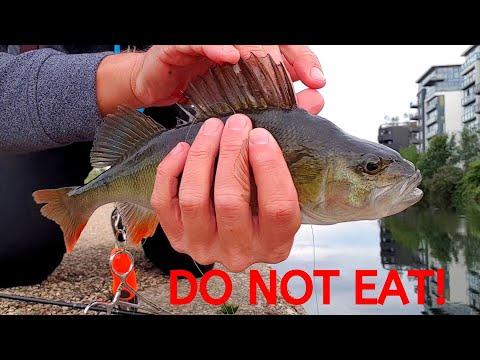 Fishing The River Lea - Random People Eating The Fish!!!! :O