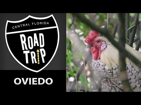 Central Florida Roadtrip: Oviedo