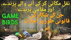 Hunting  in Pakistan \ Birds types for hunting are legally allowed \ Game Birds of Pakistan
