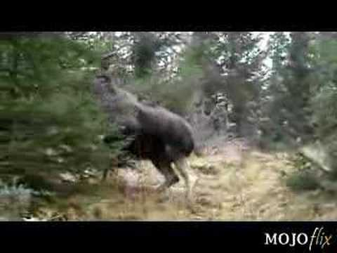 Holy Big Moose Just Wait For It Youtube