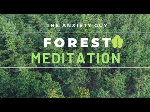 Forest Guided Meditation For Anxiety / 8 Minutes To Inner Peace