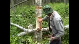 Рубка дерева для сколотня(, 2014-01-07T15:36:35.000Z)