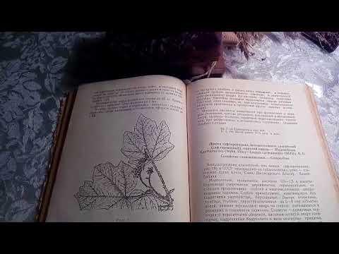 Левзея (Маралий корень, Левзея сафлоровидная), описание и лечебное применение.
