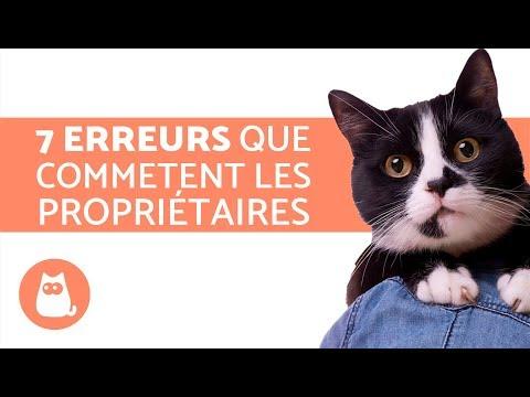 7 erreurs à ne pas commettre quand on a un chat