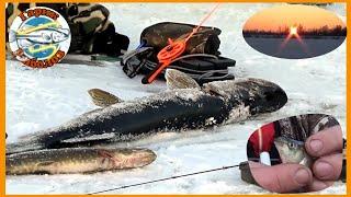 Зимняя рыбалка жерлицы на щуку как насадить живца