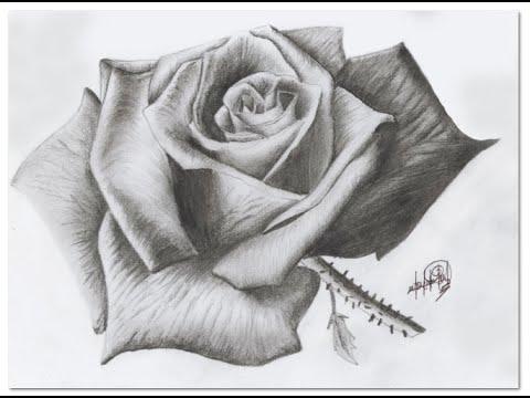 Dibujando Una Rosa A Lapiz Drawing A Rose Il Disegno Di Una Rosa