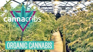 Inside America's Top Organic Cannabis Farm: Oregon's Yerba Buena YouTube Videos